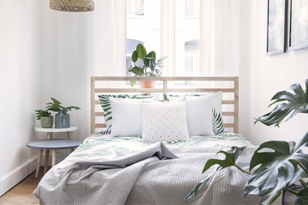 Pouvoir des plantes dans les chambres à coucher