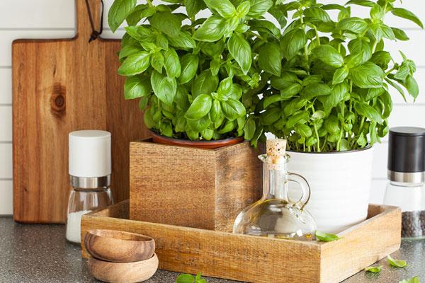 Pouvoir des plantes en cuisine